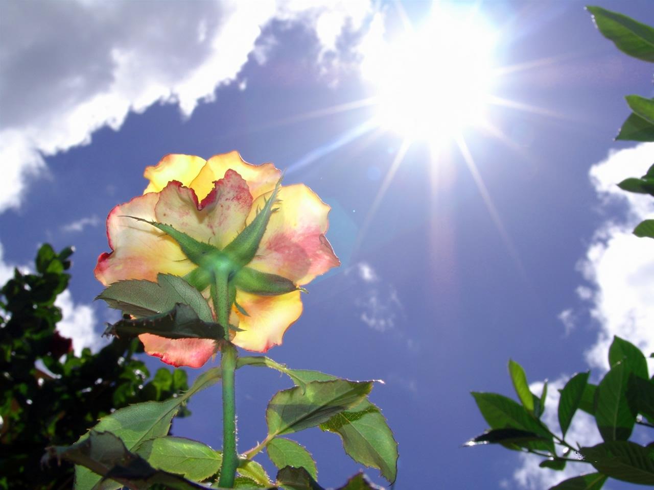 Какие цветы любят солнце фото
