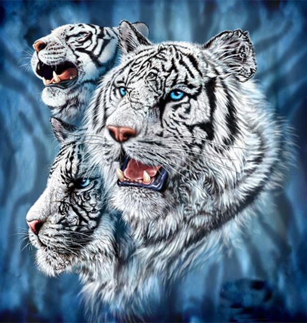 здании, около сколько тигров на картинке загадка словно предчувствовала смерть