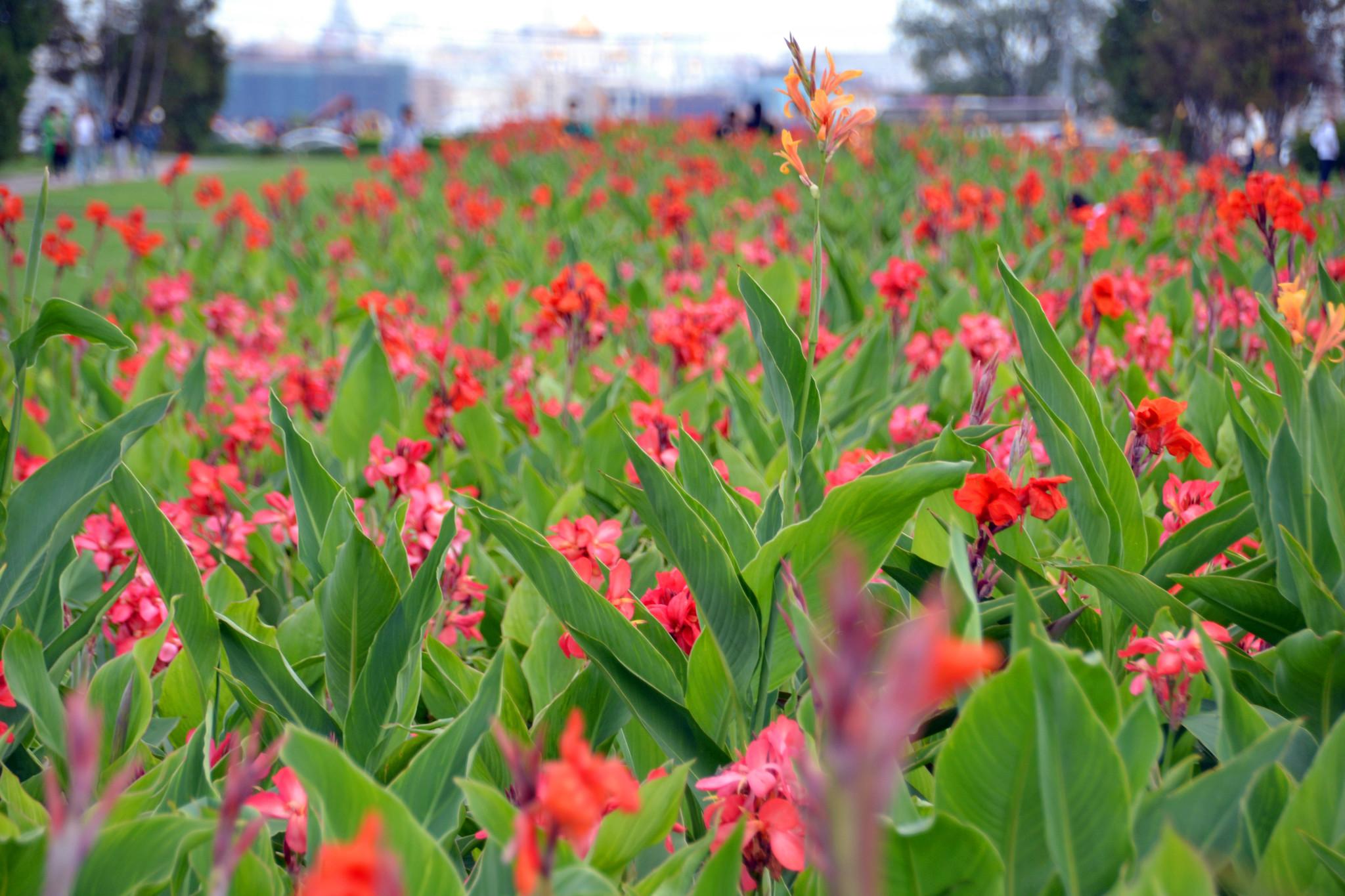 6. Ещё площадь перед Университетом засажена красивыми цветами.