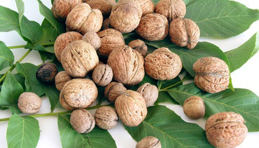При гастрите можно ли есть грецкие орехи